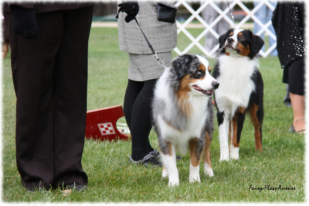 Mini Aussie Nationals